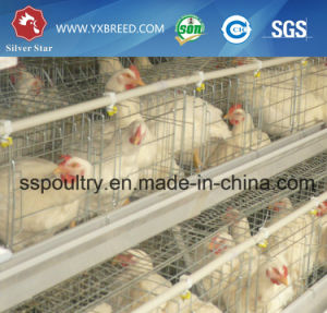 Hot-Sale H-Type Layer Poultry Chicken Cages pictures & photos