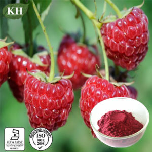 100% Natural High Quality Raspberry Extract pictures & photos