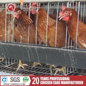 a-Type Multi-Tier Layer Cage Poultry Farm Equipment for Sale pictures & photos