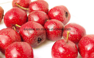 Natural (Hawthorn Extract) Vitexin CAS No 3681-93-4 pictures & photos