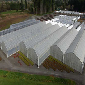 Factory Direct Sales of High-Quality Plastic Film Greenhouse pictures & photos