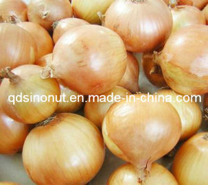 New Crop Fresh Onion pictures & photos