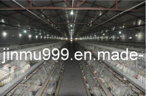 Broiler Poultry Equipment (JF007) pictures & photos