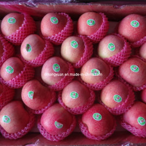 Packed in 20kg Carton Fresh Qinguan Apple pictures & photos