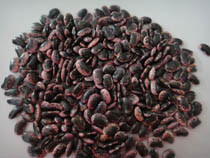 Large Black Speckled Kidney Beans