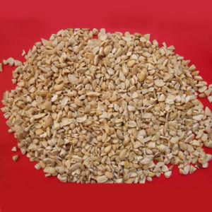 Broad Bean (DSCF0937)