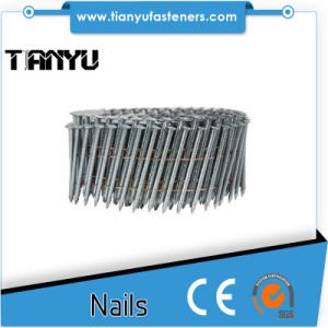 Stainless Steel Coil Nails pictures & photos