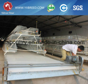 Silver Star Factory Outlet Poultry Equipment Chicken Cage pictures & photos