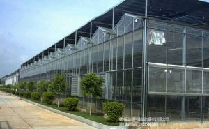 Hydroponice Greenhouse for Strawberry Planting pictures & photos