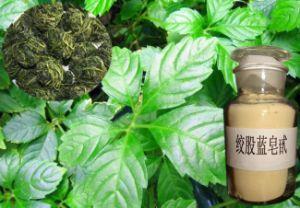 Pure Gypenosides 98% Gynostemma Pentaphylla Extract Powder