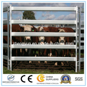 Cheap Galvanized Welded Cattle Panel/Fence Panel for Sale pictures & photos