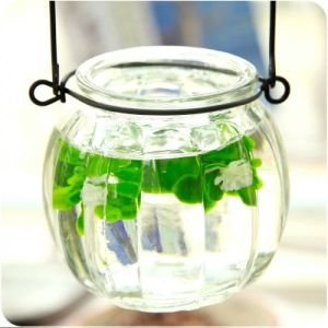 Glass Jar Water Culture Plant Container Hanging Jar pictures & photos