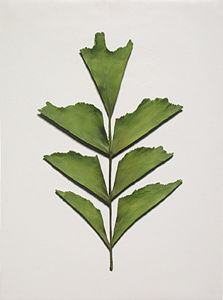Wall-Mounted Resin Ancient Leaf-Sample for Home Decoration / Hotel Decoration