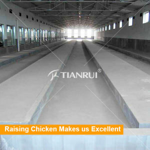 Automatic Layer Chicken Cage Manure Removal System for Poultry Equipment pictures & photos