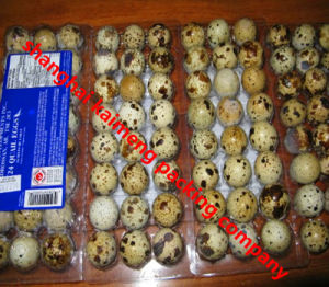 3X8 24units Clear Plastic Quail Egg Tray Wholesale pictures & photos