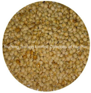 High Quality Yellow Broom Corn Millet
