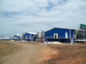 Steel Structure Poultry Farm, Chicken Shed (SSP 15008) pictures & photos
