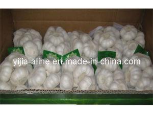 Garlic (20 x 500GR)