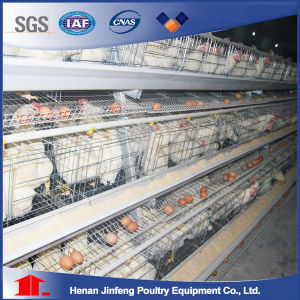 Automatic Poultry Farm Equipment for Sale in Africa pictures & photos