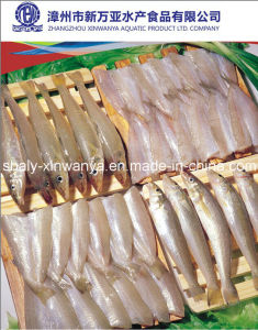 Chinese Frozen Seafood for Sale