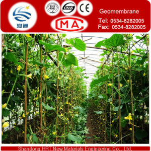 White Transparent HDPE Membrane for Greenhouses of Vegetable or Fruit pictures & photos