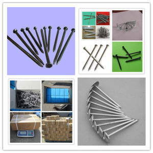 China Supply Flat Head Common Steel Nail pictures & photos