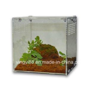 Best Selling Acrylic Reptile Terrarium Habitat for Sale pictures & photos