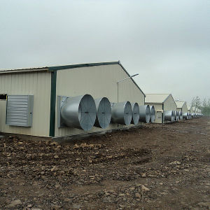 Prebabricated Steel Structure Poultry Shed for Broiler pictures & photos