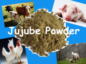 Animal Feed- Jujube Powder with Competitive Price and High Quality pictures & photos