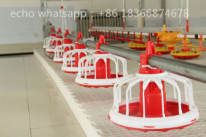 Full Set Poultry Feeding Equipment for Broiler Chicken pictures & photos