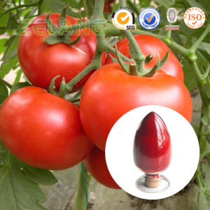 Natural and Food Grade Tomato Red Tomato Extract