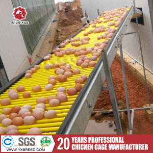 Automatic Chicken Layer Cages A3l90 pictures & photos