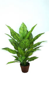 Best Selling Artificial Plants of Dieffenbachia GU105210 pictures & photos