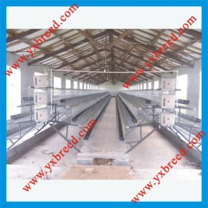 Controlled Poultry Farms pictures & photos