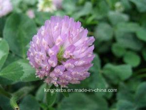 High Qualtiy Formononetin 98% by HPLC; Trifolium Pratense L. Extract pictures & photos