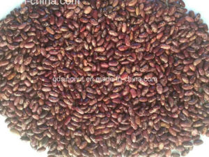 New Crop Purple Speckled Kidney Bean pictures & photos
