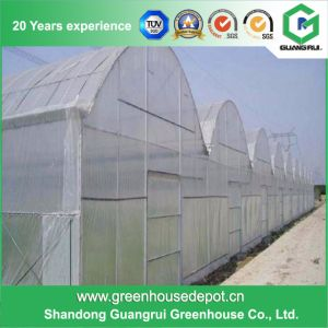 Cheap Plastic Film Tomato Greenhouse pictures & photos