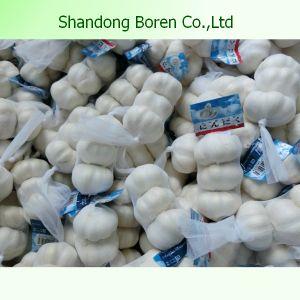 Fresh Garlic Exporters in China