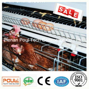 Poul Tech Poultry Farm Layer Chicken Cage (Hot Galvanization) pictures & photos