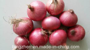 Chinese New Crop Fresh Red Onion 5-9cm pictures & photos