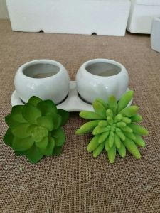 Artificial Plants and Flowers of Mini Plant Succulent Gu-SD0287 pictures & photos