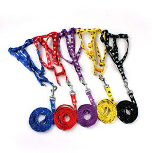 Custom Nylon Dog Accessories Lead/Collar & Pet Leash pictures & photos