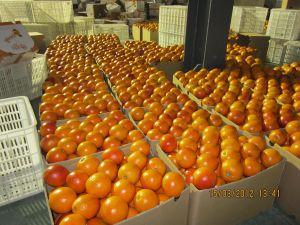 Navel Orange Stock pictures & photos