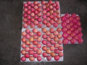 New Crop Fresh FUJI Apple (150-198) pictures & photos