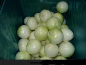 Fresh White Onion with Good Price pictures & photos
