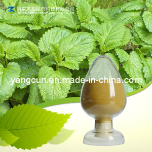 Natural Plant Extract 98% Rosmarinic Acid pictures & photos