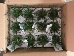 Artificial Plants and Flowers of Succulent Plant Gu20170305115403 pictures & photos