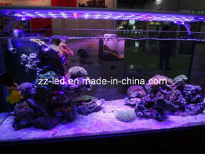 LED Coral Lighting