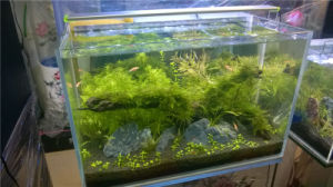 China Aquarium Supplies Small Fish Tank with Pumps pictures & photos