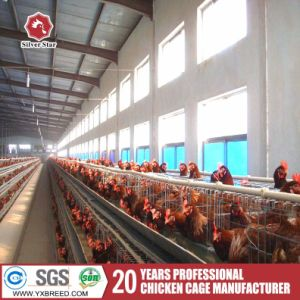 Algeria Egg / Layer Chicken Farm Batteries Cage for Laying Hens pictures & photos